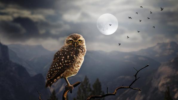 Happy 'Owl-oween'