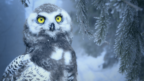 Happy Holidays to 'Owl' of You