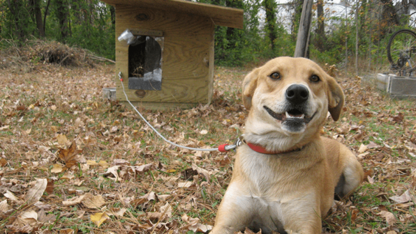 Doghouse for an 'Outdoor Dog'