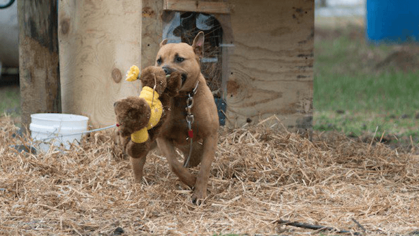 Toy for a Lonely 'Backyard Dog'