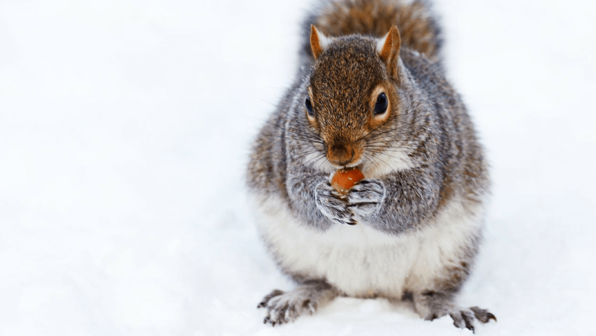 Nuts About the Holidays!