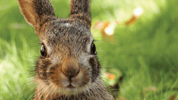 Save a Bunny's Skin