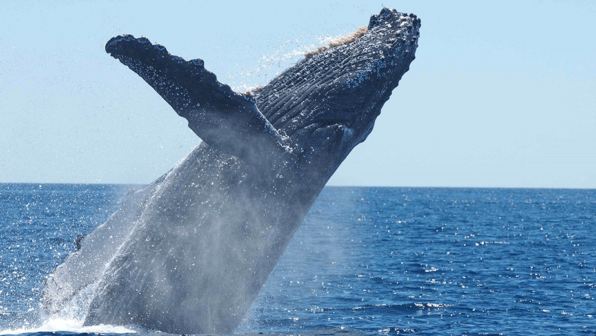 A Whale of a Birthday Wish