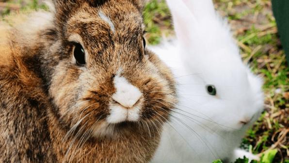 <em>Hoppy</em> Easter