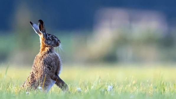 Have a Good <em>Hare</em> Day