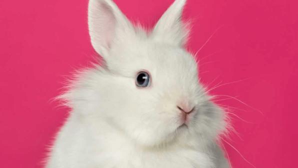 Happy Easter, Bunny!