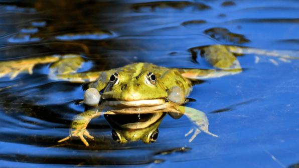 Un'frog'getable, in Every Way