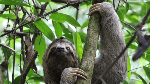 Thanks a 'Sloth'!