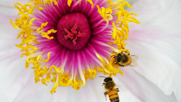 'Bee' Well Soon