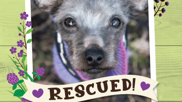 Fritz was Rescued!